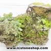 ▽ไพโรมอร์ไฟต์ Green Pyromorphite (70g)