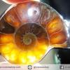 จี้ฟอสซิล แอมโมไนต์เหลือบรุ้ง(Ammonite) ผ่าครึ่ง (7g)