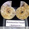 ฟอสซิล แอมโมไนต์ ผ่าครึ่งคู่ พร้อมฐานกระจก (Ammonite)(7g)