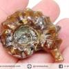 แอมโมไนท์เขาแพะ (Goat Horn Ammonite) จากมาดากัสการ์ (27g)