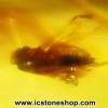 ▽อำพันโดมินิกัน มีแมลงภายใน Dominican Blue Amber ของแท้(11.34ct)