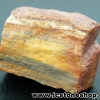 ▽ไม้กลายเป็นหิน Petrified Wood (10.5g)
