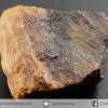 ไม้กลายเป็นหิน Petrified Wood (7.2g)