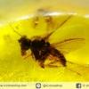 อำพันโดมินิกัน มีแมลงภายใน 3 ตัว Dominican Blue Amber ของแท้(14.8ct)