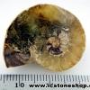 ▽ฟอสซิล แอมโมไนต์มาดากัสการ์เหลือบแดง (Ammonite) (5.5g)