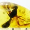 อำพันโดมินิกัน มีแมลงภายใน 3 ตัว Dominican Blue Amber ของแท้(9.6ct)