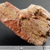 ไม้กลายเป็นหิน Petrified Wood (5.7g)