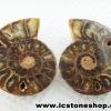 ▽ฟอสซิล แอมโมไนต์ลายเสือ (Ammonite) (112.5g)