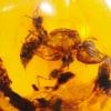 ▽อำพันโดมินิกัน กลุ่มแมลงภายใน Dominican Blue Amber ของแท้(15.95ct)