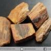 ▽ไม้กลายเป็นหิน Petrified Wood (11.5g)