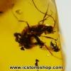 ▽อำพันโดมินิกัน มีแมลงภายใน 5 ตัวDominican Blue Amber ของแท้(7.2ct)
