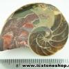 ▽ฟอสซิล แอมโมไนต์มาดากัสการ์ (Ammonite) (17.2g)