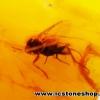 ▽อำพัน บอลติกขัดมันมีแมลงภายใน Genuine Baltic Amber (1.935ct.)