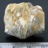หอยโบราณเป็นหิน (ใบพัด)จากประเทศจีน (15g)