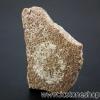 เปลือกไข่ไดโนเสาร์ Saltaurus (6.8g)