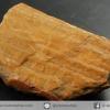 ไม้กลายเป็นหิน Petrified Wood (7.7g)