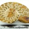 ▽ฟอสซิล แอมโมไนต์มาดากัสการ์ (Ammonite) (19g)