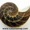 ฟอสซิล แอมโมไนต์เหลือบรุ้ง(Ammonite) (6.4g)