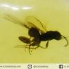 อำพันโดมินิกัน มีแมลงภายใน Dominican Blue Amber ของแท้(7.2ct)
