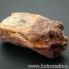 ▽ไม้กลายเป็นหิน Petrified Wood (12g)