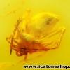 ▽อำพัน บอลติกขัดมันมีแมลงภายใน Genuine Baltic Amber 2 ตัว (4.935ct.)