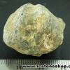 หอยโบราณเป็นหิน (ใบพัด)จากประเทศจีน (14g)