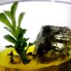 สวนหินในขวดแก้ว ไม่ต้องรดน้ำ (ไพไรต์+ต้นถุงเงิน ถุงทอง)