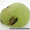 ▽พรีไนท์ (Prehnite)ธรรมชาติ ประเทศมาลี (7.3g)