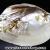 เปลือกหอยมุกพร้อมไข่มุก (139g)