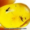 ▽อำพันโดมินิกัน มีแมลงภายใน 2 ตัว Dominican Blue Amber ของแท้(4.05ct)