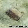 ▽เพชรหน้าทั่ง พัทลุง ไพไรต์ในหิน (24g)
