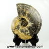 ฟอสซิล แอมโมไนต์มาดากัสการ์ ลายเฟิร์นขนาดใหญ่(Ammonite) (792g)