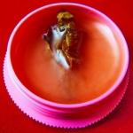 สีผึ้งมหาเสน่ห์