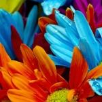 เมล็ดพันธุ์ไม้ดอก