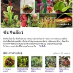 เมล็ดพันธุ์พืชกินแมลง