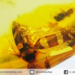 มีแมลงภายใน-โคปอลธรรมชาติ (COPAL) อำพันอายุน้อยธรรมชาติ จากโคลัมเบีย Colombia Amber(40 กะรัต)