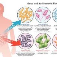 Probiotic โปรไบโอติก