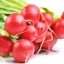 แรดิช Radish / หัวผักกาดแดง / 50 เมล็ด thumbnail 1