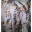 เสื้อแฟชั่น xhilartion อก 34-38 นิ้ว thumbnail 4