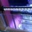 โคมหนีบ Led marine+ 18cm 7สี + รีโมท thumbnail 4