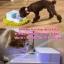 น้ำพุแมว BeaconPet ขนาด1.8 ลิตร thumbnail 6