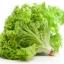 ผักกาดหอม ซีเฟรช หรือผักสลัด / 500 เมล็ด thumbnail 3