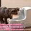 น้ำพุแมว Drinkwell รุ่น Mini ขนาด 1.2 ลิตร thumbnail 3