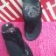 รองเท้า fitflop ไซส์ 36-40 No.FF019 thumbnail 1