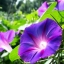 ผักบุ้งฝรั่ง สีฟ้า เฮฟวี่บลู Morning Glory heavy blue / 10 เมล็ด thumbnail 1