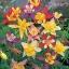 ดอกโคลัมไบน์ มิ๊กซ์ Columbine Flower Mix / 25 เมล็ด thumbnail 1