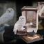 Magical Creatures Hedwig No.1 thumbnail 1