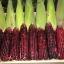 ข้าวโพดพันธ์ุสีม่วง Purple Corn / 40 เมล็ด thumbnail 3