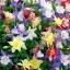 ดอกโคลัมไบน์ มิ๊กซ์ Columbine Flower Mix / 25 เมล็ด thumbnail 5
