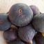 มะเดื่อฝรั่ง ม่วง fig purple patlican / 10 เมล็ด thumbnail 2
